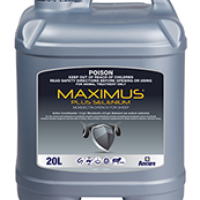 maximus_sheep_20l_big173x222
