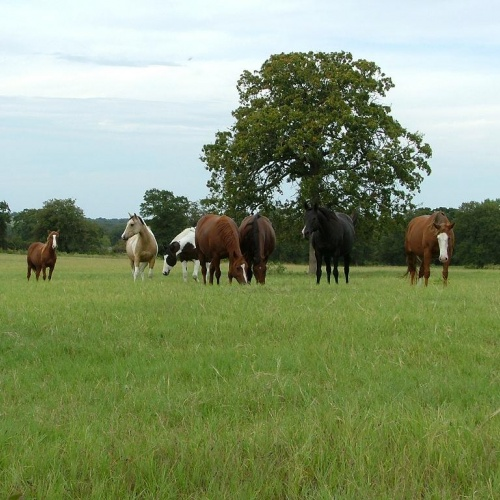 group_of_horses